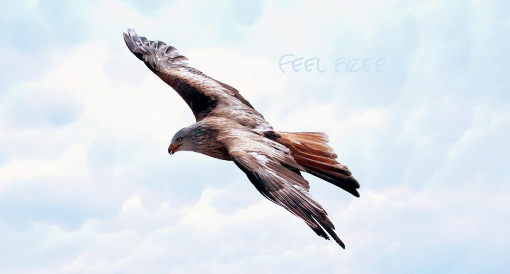 freedom-589576_1280