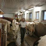 Mjölk eller inte? – Besök hos Josefin, en fjällko