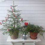 12 juliga rätter till jul och lite grönt med…